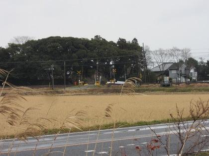140211_ichigo_2.jpg