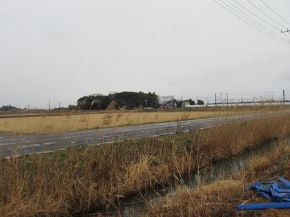 140211_ichigo_9.jpg