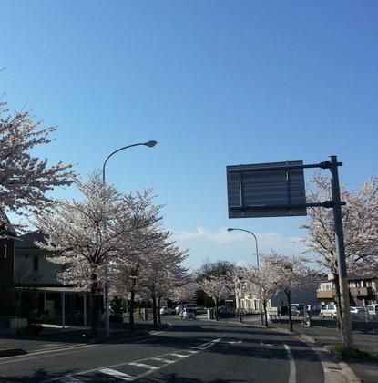 20140404_sakura (2).jpg